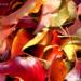 sept 26 08 colours of autumn